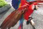 Cómo evitar o corregir el mal comportamiento de su ave