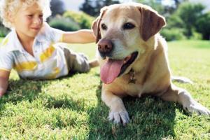 Las mejores razas de perros para una familia con niños