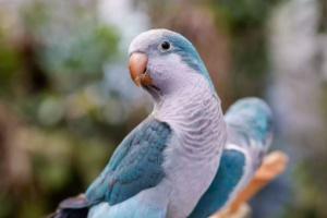 TOP 5 especies de ave que pueden hablar