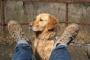 ¿Por qué mi perro joroba mi pierna?
