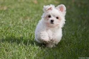 Problemas de filtración renal en perros