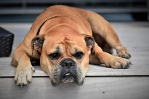 Gatorade para perros: ¿es seguro? ¡Sí! (Pero 1 razón no lo es)