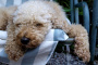 ¿Pueden los perros ser pesimistas?