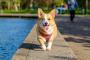 ¿Mi perro realmente necesita una visita anual de un veterinario?