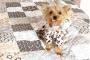 6 maneras de ayudar a su perro a deshacerse de un aliento apestoso