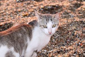 ¿Por qué mi gato patea la basura de su caja de arena?