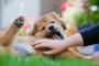 Fluido en el abdomen en perros