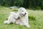Picazón, deseo de arañar, masticar o lamer causando piel inflamada en los perros