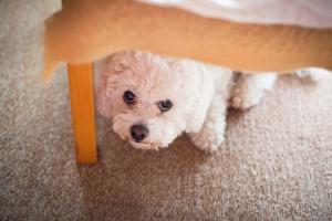 7 Consejos de preparación para tormentas para dueños de perros