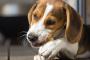 5 causas comunes de asfixia en las mascotas.