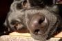 Pasadizo anormal entre la boca y la cavidad nasal en perros