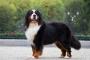 Guía para la salud del pene de su perro: Todo lo que necesita saber.
