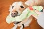 Tu perro se comió un calcetín, ¿qué hacer en este caso?