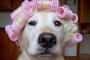 5 Consejos para la preparación de perros que lo llevarán más allá de lo básico