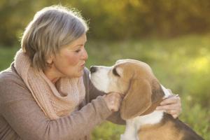 Cómo tratar las picaduras de pulgas en humanos y mascotas