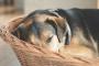 7 cosas que debes saber para elegir la mejor cama para perros