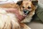 Perro gruñendo: 5 cosas que podrían ser la culpa