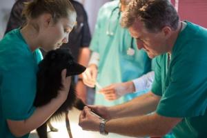 Trombocitopenia en perros: síntomas, causas y tratamientos.