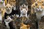 Divorcio: la esposa elige 550 gatos por encima del marido