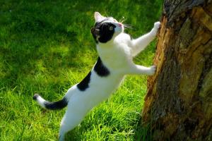 30 hechos de gatos que no sabías