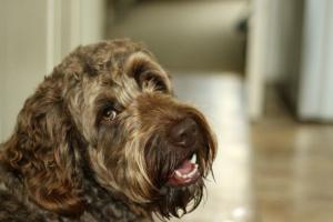Potasio en sangre bajo en perros