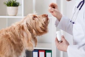 Phenobarbital para perros: usos, dosis y efectos secundarios.