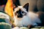 Dolor de cuello y espalda en gatos