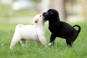 Acerca de la ansiedad por separación en perros