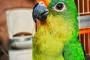 Cómo elegir un buen criadero de aves