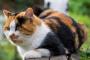 Causas de la enfermedad cardíaca en los gatos