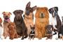 Como seleccionar a tu perro