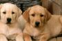 13 pasos simples para mejorar la memoria de tus perros