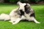 Dermatitis de contacto en perros: síntomas, causas y tratamientos.