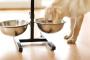 ¿Tu perro tiene foliculitis? Aquí hay formas naturales de ayudar