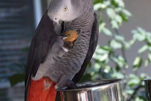 ¿Son ciertas especies de ave más inteligentes que otras?