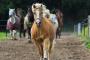 Cistitis en caballos