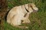 Dermatitis atópica en perros: síntomas, causas y tratamientos.