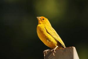 TOP 3 mejores especies de aves mascota para ancianos