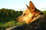 Monitores de actividad y salud para perros