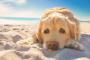 Cómo prevenir el golpe de calor en los perros
