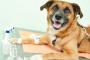 Ensayos clínicos con perros que ayudan a encontrar curas para el cáncer en humanos