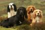 Hinchazón en perros: ¿es una respuesta gastrointestinal preventiva la respuesta?