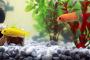 Añadiendo nuevos peces a su acuario