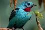Infecciones por poxvirus en aves