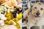Glucosamina para perros: ¿qué es y qué hace?.