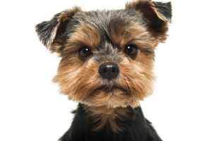 ¡Perro rabioso! ¿Está enojado con su perro?