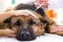 Tumor relacionado con las vacunas en perros