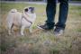 Ejercicio para su perro mayor
