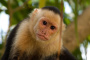 Problemas de tener a un mono como mascota