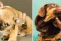 Comezón, mordedura y lamida en perros